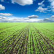 Stock Photo: Green field under cloudy sky