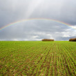 Natural rainbow — Stock Photo