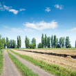 Rural road — Stock Photo #5587222