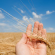 Harvest in hand — Stockfoto