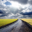 Stock Photo: Wet rural road