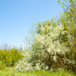 Stock Photo: Glade in spring