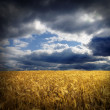 Field and dramatic sky - Stock Photo