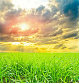 Field of grass with sun — Stock Photo