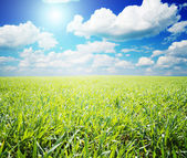 Green field with sun — Stock Photo