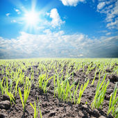 Field with sun — Stock Photo