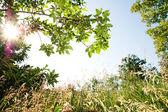 Přírodní rám s strom a louka — Stock fotografie
