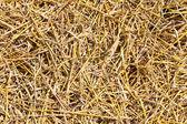 Straw closeup — Stock Photo