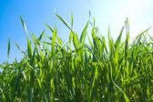 Grass under sunrays — Stock Photo