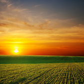 Sun over green field — Stock Photo