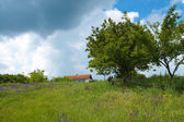 Green tree, grass and sky — Stock Photo