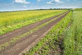 Road in green field — Stock Photo