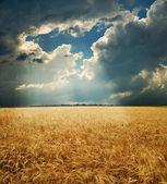 Campo bajo cielo dramático — Foto de Stock
