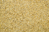 Grain as background — Stock Photo