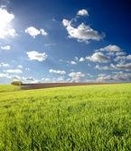 Green spring field — Stock Photo
