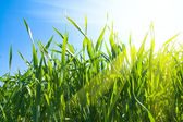 Grass under sunrays — Stock Photo