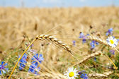 Harvest with flowers — Stock Photo