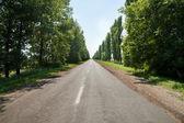 Road beetwen trees — Stock Photo