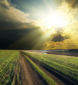 Sun and clouds over road — Stock Photo