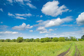 Road in green field — Stock Photo