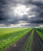 Rural road in green field — Stock Photo