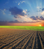 Field and sunset — Stockfoto