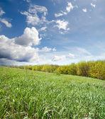 Green grass near wood — Stock Photo