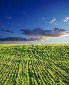 Grünes gras unter tiefblauem himmel — Stockfoto
