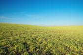 Yeşil alan — Stok fotoğraf