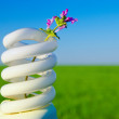 Flower in energy saving lamp — Stock Photo