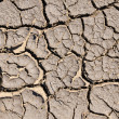 Stock Photo: Dry cracked earth