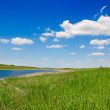 River in green grass — Stock Photo