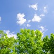 Stock Photo: Trees and sky