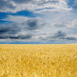 Field under dramatic sky - Stock Photo