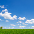 Clouds and green grass — Stock Photo