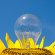 Light bulb and sunflower - Stock Photo