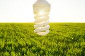 Energy saving lamp over field — Stock Photo