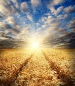 Field in sunset — Stock Photo