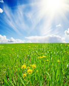 Spring meadow with flowers — Stock Photo
