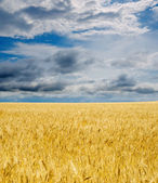 Field under dramatic sky — Stock Photo