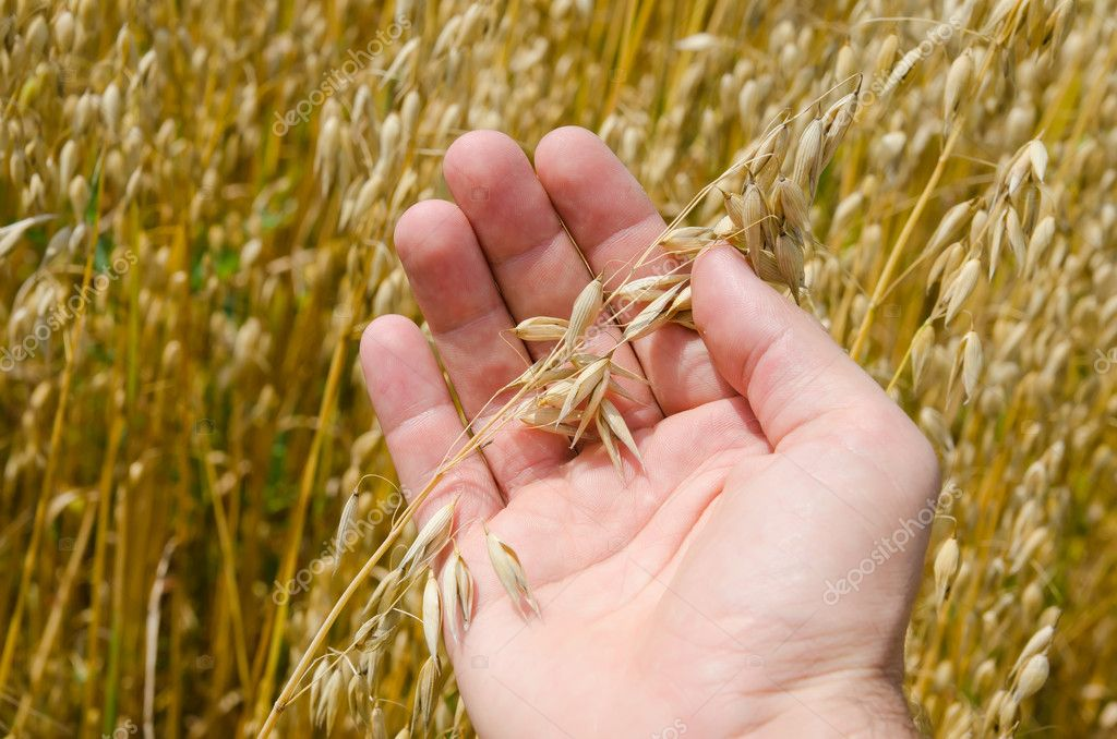 Gold harvest in hand  Stock Photo #6453972