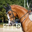 Chestnut sport horse with bridle - Stock Photo