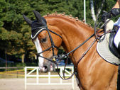 Chestnut sport horse with bridle — Stock Photo