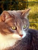 Gray cat portrait — Stock Photo