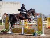 Man with horse show jumping — Photo