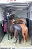 Six Ponies Loaded And Off to a Showing — Stock Photo