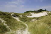Sand dunes in south Sweden — Stock Photo