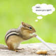 Smoking chipmunk. — Stock Photo #6602555