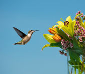 Hummingbird approaching bouquet of flowers. — Stock Photo