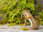 Christmas squirrel. — Stock Photo